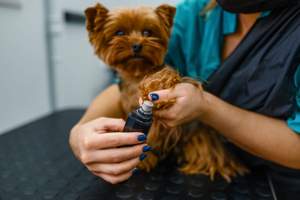 Dog having nails trimmed by groomer