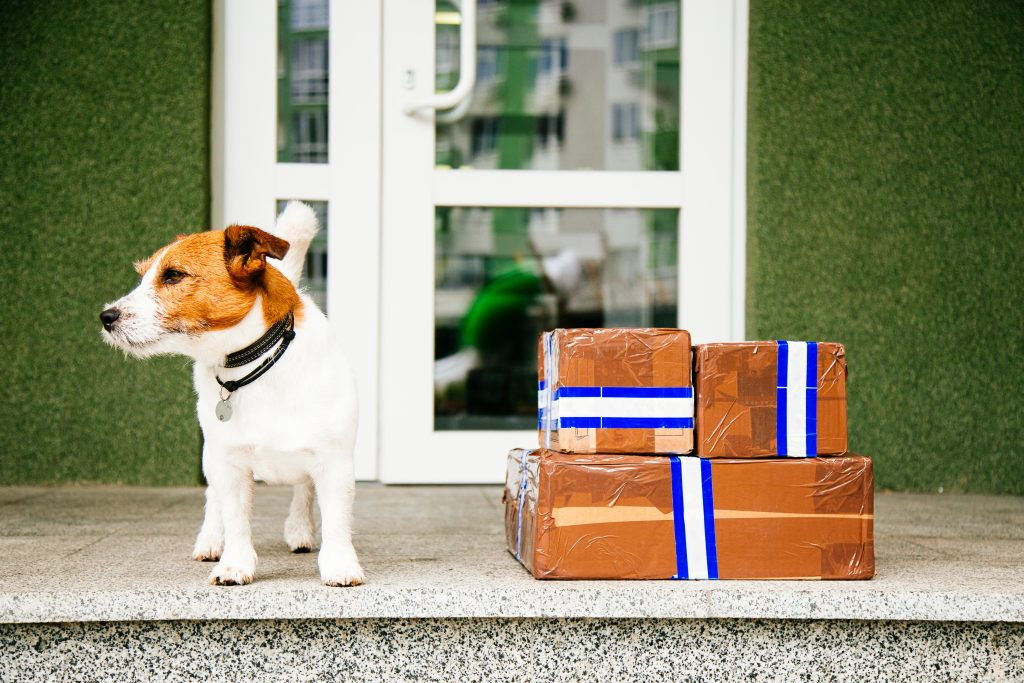 Dog sitting next to parcel delivery
