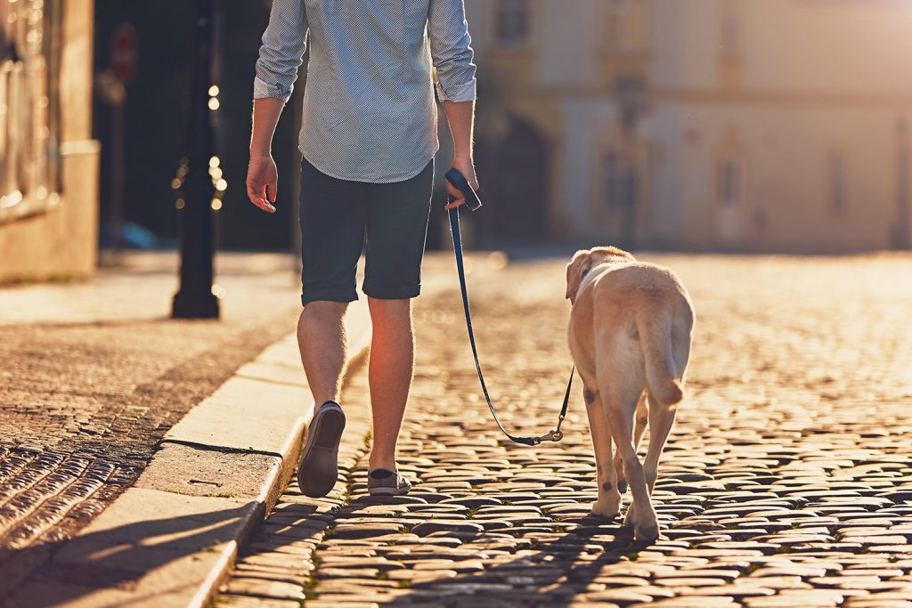 Dog on morning walk